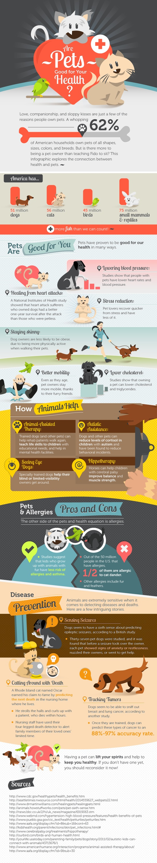 Pet Infographic